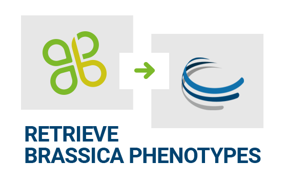 Retrieve Brassica Phenotypes